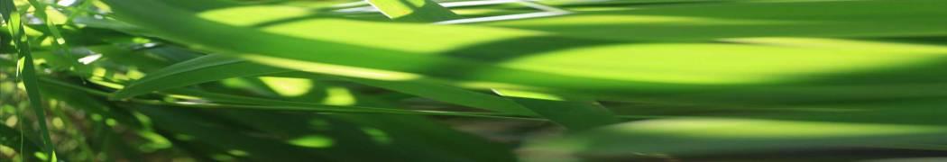 01-23-01 Beschleunigtes Gras
