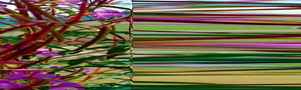 06-01-02 Beschleunigter Busch